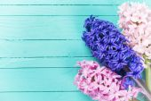 Postcard with fresh spring flowers hyacinths — Stock Photo