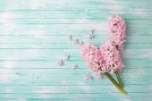 Background with fresh flowers hyacinths   — Foto de Stock