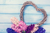 Postcard with flowers hyacinths and decorative heart — Stock Photo