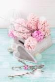 Verse bloemen hyacinten — Stockfoto