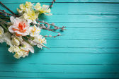 Background with fresh daffodils and willow flowers — Stock Photo