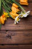 Background with fresh daffodils and tulips — Stock Photo
