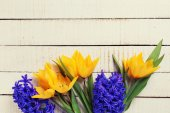 Background with fresh tulips and hyacinths — Stock Photo