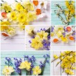 Collage with colorful spring flowers — Stock Photo #74082771