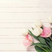 Background with tulip flowers — Stock Photo