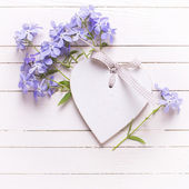 Background with blue flowers and decorative heart — Stock Photo