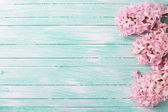 Background with fresh flowers hyacinths — Stock Photo