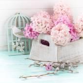 Fresh flowers hyacinths in box — Stock Photo