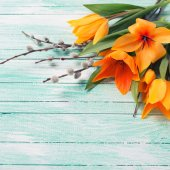 Background with tulips and willow flowers — Stock Photo