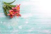 Bakgrund med färska tulpaner — Stockfoto