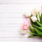 Tło z kwiatów tulipanów różowy i biały — Zdjęcie stockowe
