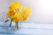 Background with fresh daffodils — Stock Photo