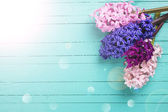 Background with fresh flowers hyacynths — Stock Photo