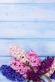 Fresh flowers hyacynths  — Stock Photo