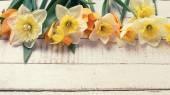新鮮なチューリップと水仙の背景 — ストック写真