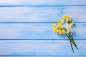 Background with fresh narcissus — Stock Photo