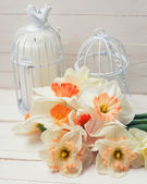 Daffodils and candles in cages — Stock Photo