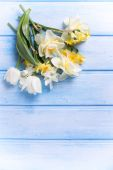 Narcissus and tulip flowers — Stock Photo