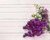 White and violet lilac flowers — Stock Photo