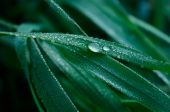 A Blade of Grass and Water Droplets — Stock Photo