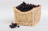 Black chokeberry — Stock Photo