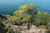 Crimean Peninsula,  Black Sea Coast — Stockfoto