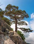 Mountain vegetation of Crimea — Stock Photo