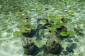 Водоем с кувшинками в парке водоема — Стоковое фото