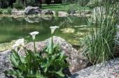 Estanque con nenúfares en un parque de la laguna — Foto de Stock