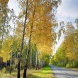 Autumn landscape in the park area. — Stock Photo #64883097