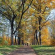 Autumn landscape in the park area. — Stock Photo #64883109