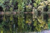 Old pond in the forest area — Stock Photo