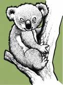 Koala teddy  — Stock Vector