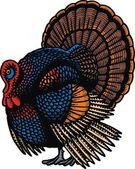 Turkey illustration  — Stock Vector
