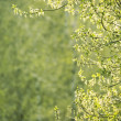 Spring background — Stock Photo #72726473