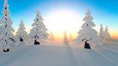 Snow forest — Foto de Stock