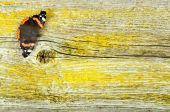 Red admiral butterfly on old wooden board — Stock Photo