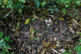 Wild snake in the bush — Stock Photo