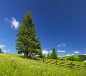 Tree on meadow — Stock Photo