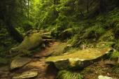 Trail on tropic jungle — Stock Photo
