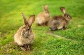 Rabbits on grass — Stock Photo