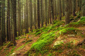 Forest in summer time — Foto Stock