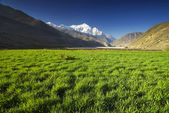 Field in mountain valley — Stock Photo