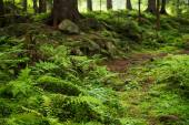 Natural forest background — Stock Photo