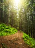 Walkway in summer forest. — Stock Photo