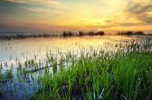 Sunset on lake in summer time — Stock Photo