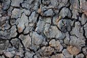 Crack dirt — Stock Photo