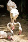 Fenicottero rosa — Foto Stock