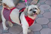 Small dog inthe garden — Zdjęcie stockowe