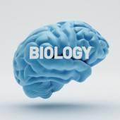 Biology Brain  — Stock Photo